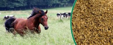 Saatgut für Pferdeweiden