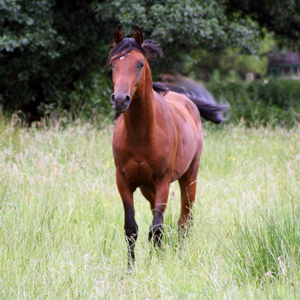 pferdeweide-pflege-fruehjahr1