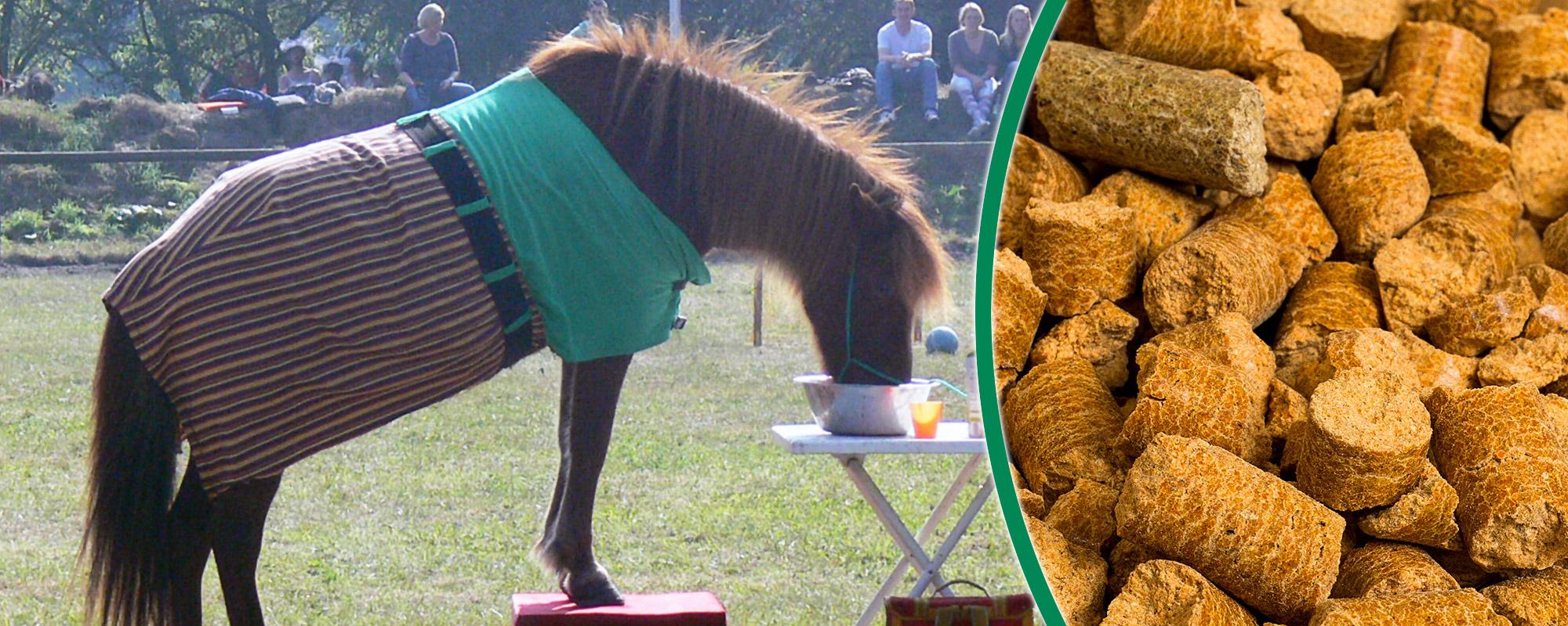 Belohnungsfutter & Pferdeleckerli