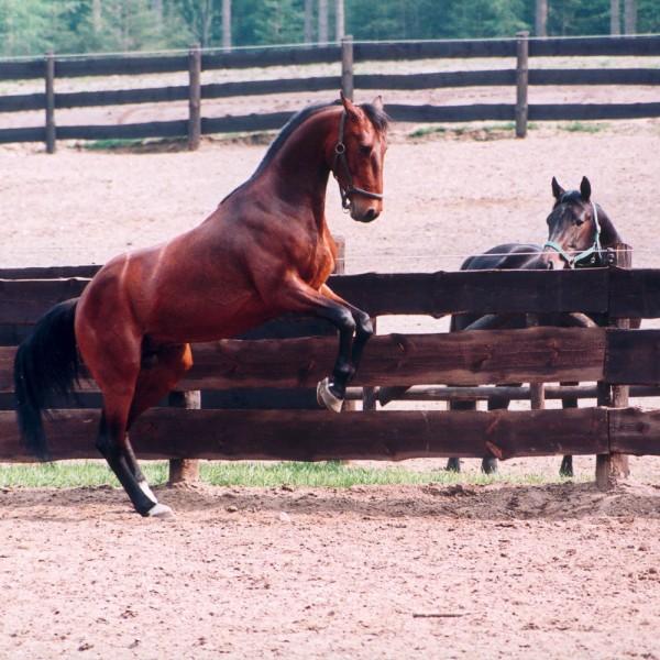 sicherheit-im-pferdestall