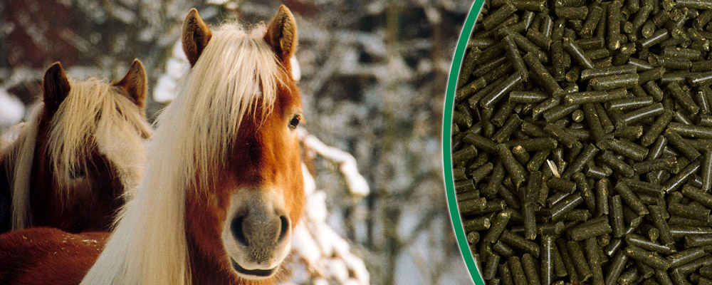 Grundfutter für Pferde