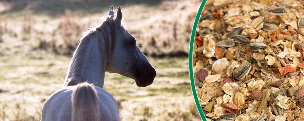 Aufbaufutter für geschwächte Pferde