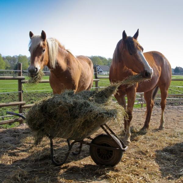 pferdefutter-grassilage-heulage-haylage_f13352457