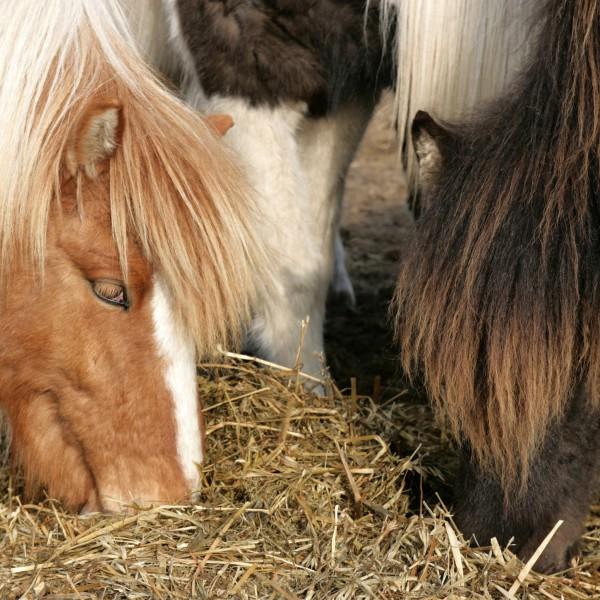 grassilage-heulage-haylage-pferde_f34514943