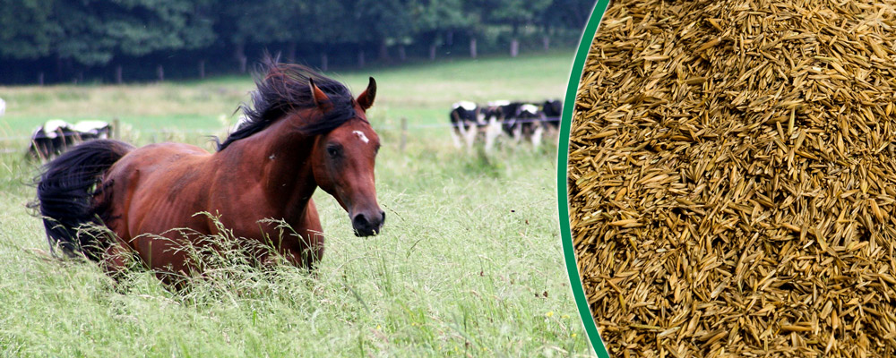 Saatgut für Pferdeweiden - Weidesaat