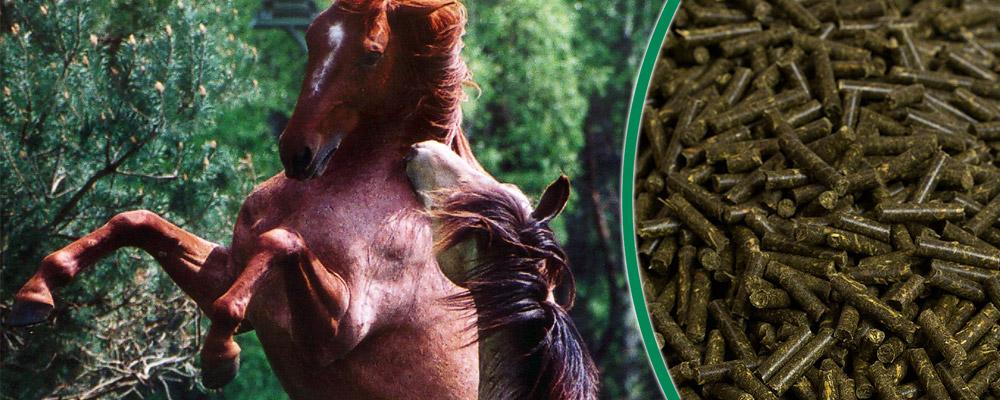 Kräuterpellets für Pferde