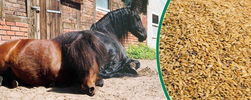 Schonkost & Diätfutter für Pferde