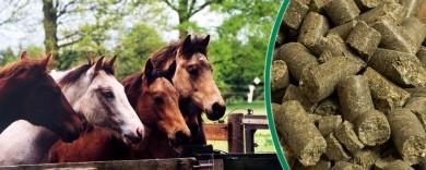 Mineralfutter für Pferde