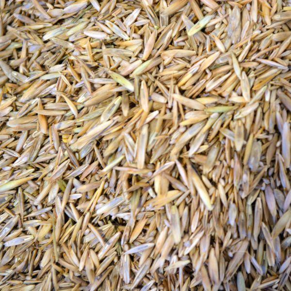 Gräsermischung - Pferdeweide-Saatgut mit Weidelgras
