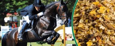 Futter für Sportpferde
