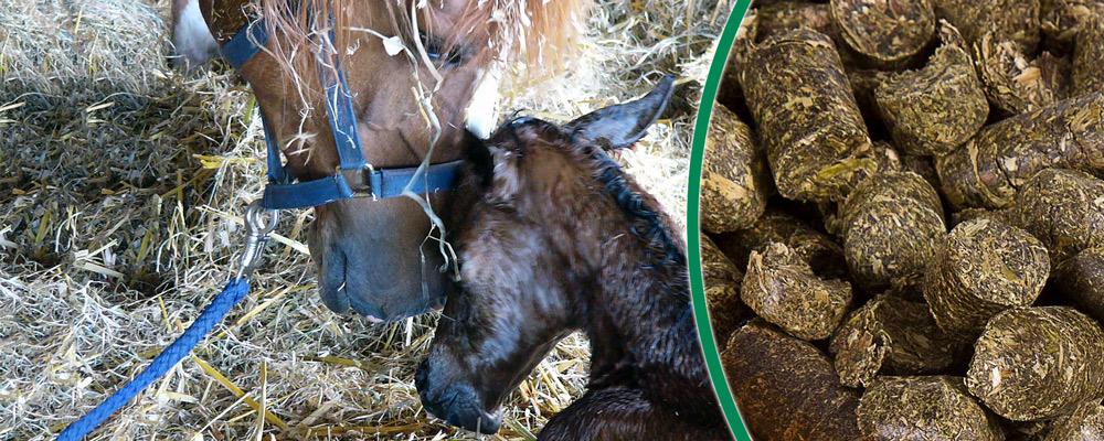 Staubfreier Heuersatz für Ihr Pferd