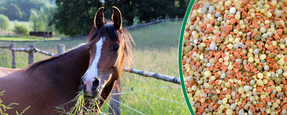 Dünger für Pferdeweiden - Weidedünger